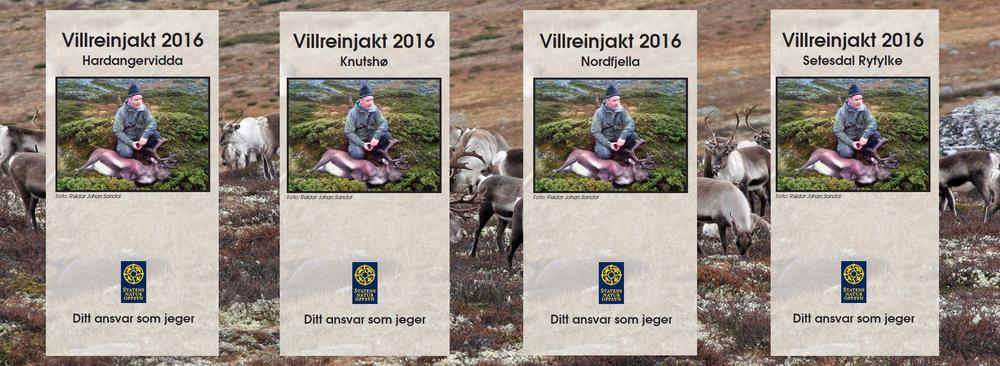 Villreinjakta 2016 nærmer seg med stormskritt, og Statens naturoppsyn (SNO) har ajourført årets jaktbrosjyre med aktuell informasjon. Foto: A. Nyaas