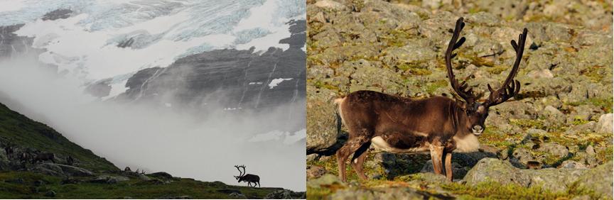 Arkivbilder fra Svartebotn i Sogn og Fjordane. Foto: Fredrik Stige