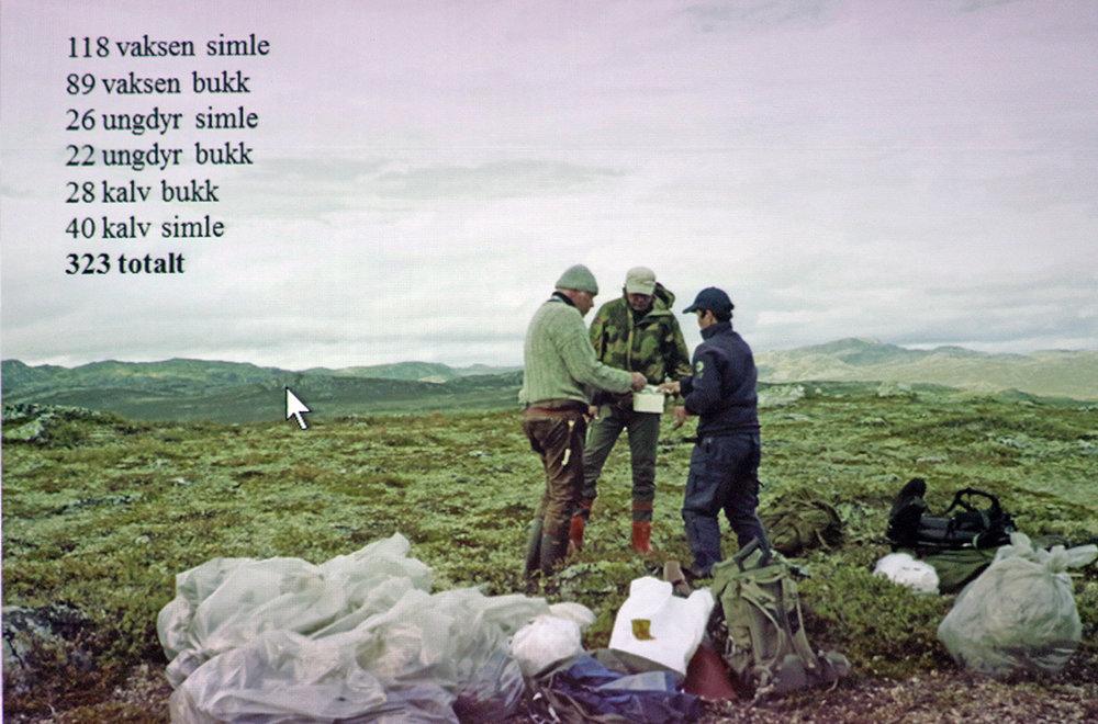 Opptellingen viste at 323 dyr ble slått i bakken av lynnedslaget på Hardangervidda. Foto/illustrasjon: Knut Nylend, SNO