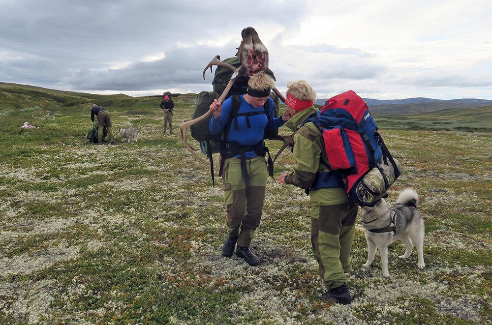 Av totalkvoten på 18.595 dyr ble 6121 felt under jakta i høst. Foto 2016: Arne Nyaas
