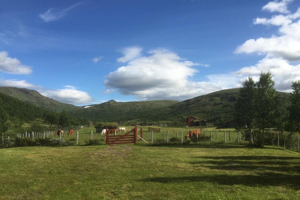 Synnerdalen i Budalen. Foto: Randi Stolpnes
