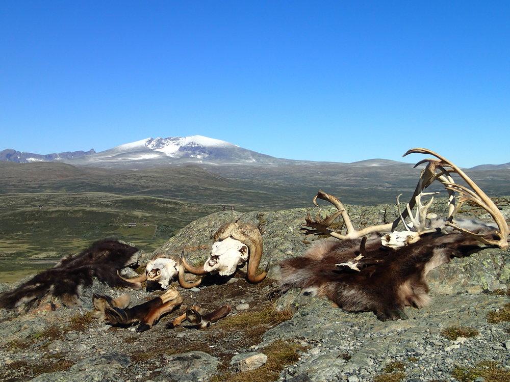 Naturveiledning på viewpoint. Foto; Sigrid Lium, NVS.JPG
