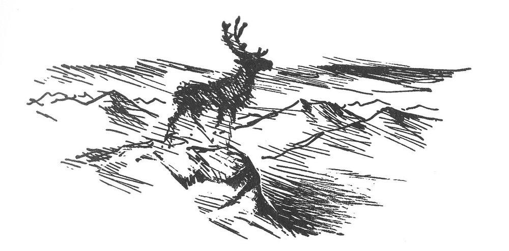 """Teikning frå boka """"Reinsbukken på Jotunfjell""""."""