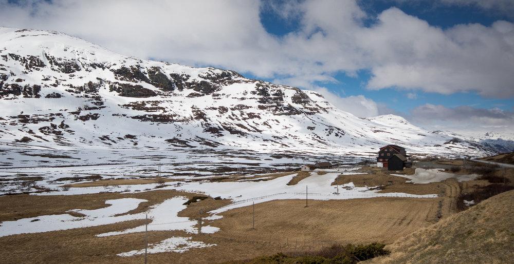 De østvendte liene mot Rv 52 brukes gjerne av bukk på vårparten. Foto: Kjell Bitustøyl
