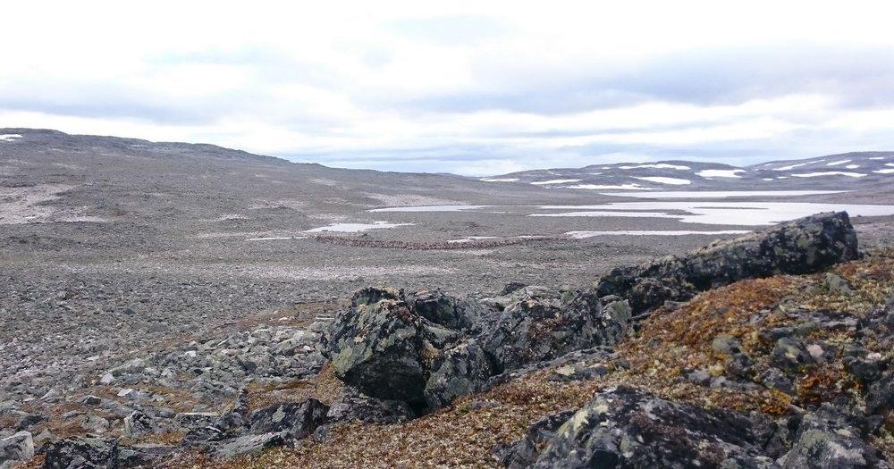 Det ligg an til ei lang jakttid i Nordfjella til hausten. Illustrasjonsfoto: Anders Mossing