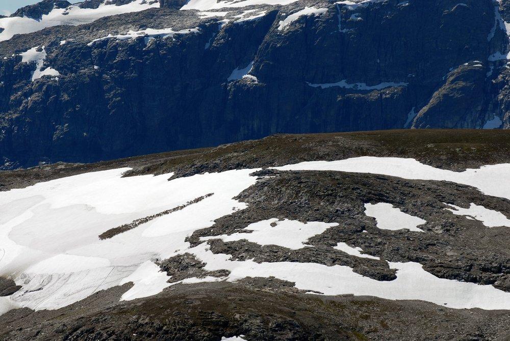 Fleire hundre dyr kan samlast på same snøfonn. Foto: Olav Strand