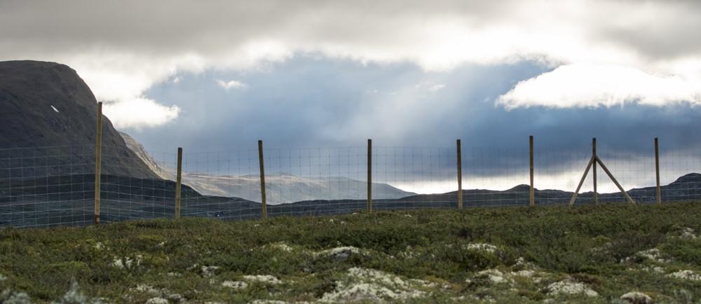 Sperregjerdet over Hemsedalsfjellet er no ferdig fram til Eldrevatn. Foto: Kjell Bitustøyl
