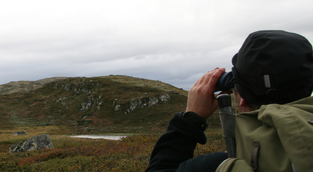 Utvidet jakt betyr flere muligheter til slike opplevelser i Brattefjell-Vindeggen. Illustrasjonsfoto: Anders Mossing