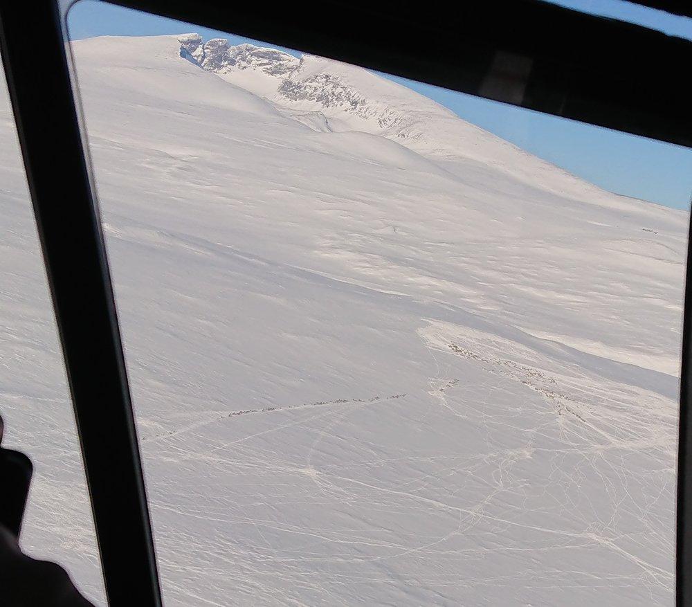 Gode sporforhold ved Snøhetta. Foto: Heidi Vognild