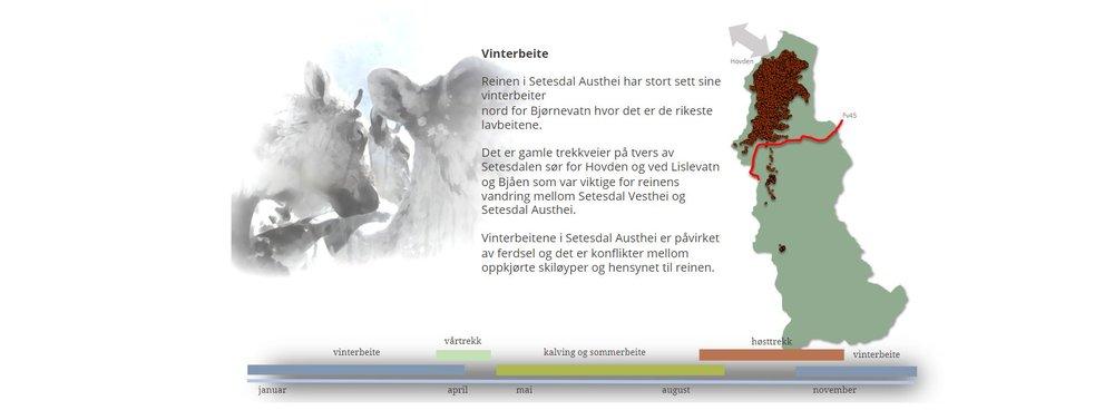 """Denne """"klikke-figuren"""" forteller om fordelingen av ulike beiter i Setesdal Austhei, og om reinens årlige vandringer for å komme til de (skjermdump fra historien)."""