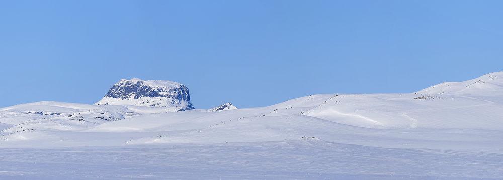 På Hardangervidda har man merka dyr sidan 2001. Her bør ein antakeleg fortsette den lange dataserien. Foto: Anders Mossing