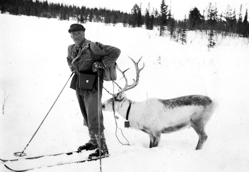 Reingjetar Martin Bakken frå Bøverdalen med leiarreinen. Foto utlånt av Gunnar Storeli.