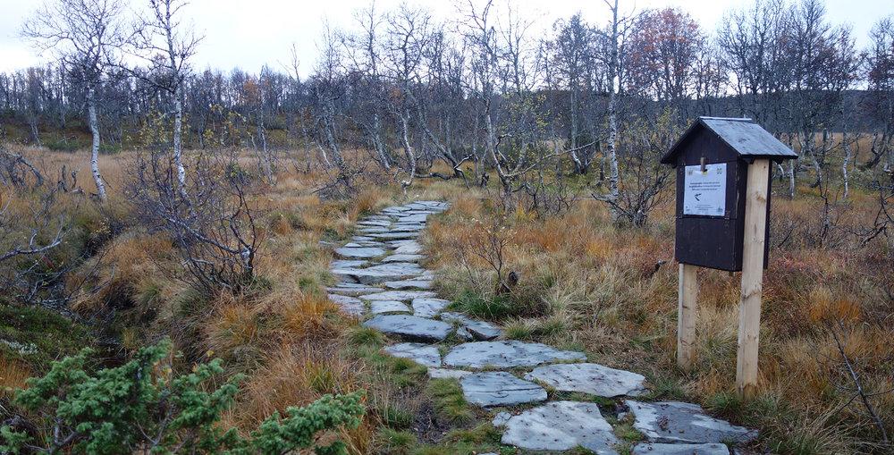 Svarkasse langs stien til Falkeriset. Foto: Sofie Selvaag