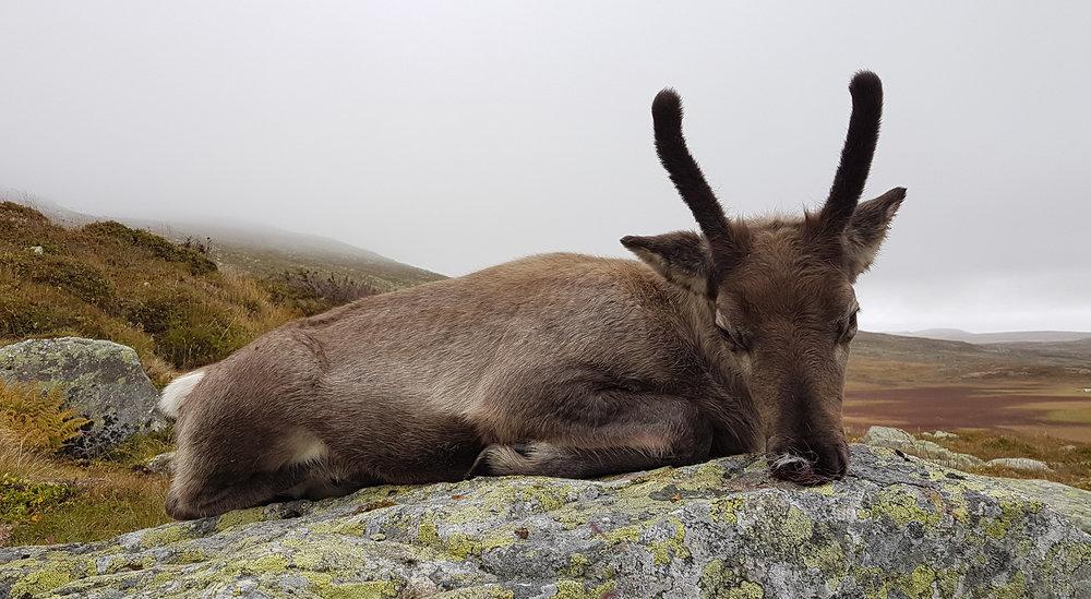 Nå foreligger resultater for jakt og strukturtelling i sone 2. Illustrasjonsfoto: Anders Mossing