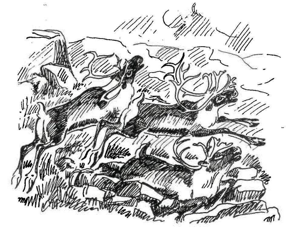 """Illustrasjon henta frå boka """"Den dragende flok"""" med tekst og teikningar av Jens Rosing"""