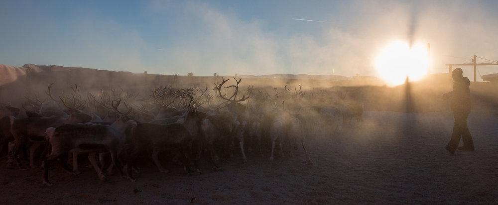 Vinterslakting på Golsfjellet: Kuldegradene krabba under 20 minus denne desemberdagen. Då handlar det om å kle seg godt. Foto: Kjell Bitustøyl
