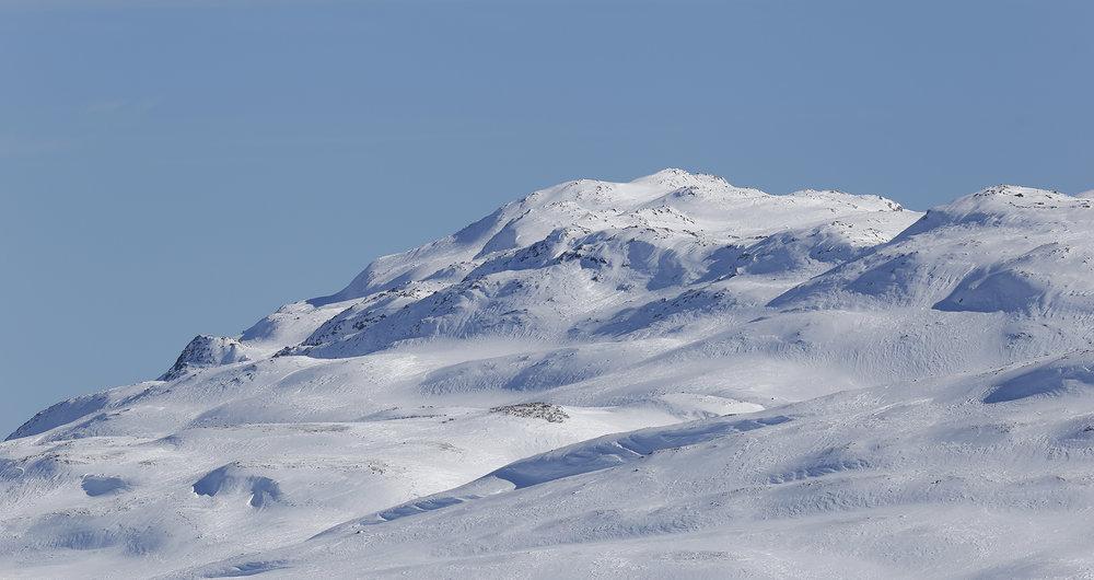 En av flokkene i Brattefjell-Vindeggen som fikk påmontert GPS-halsbånd i går. Vindeggen i bakgrunnen. Foto: Anders Mossing