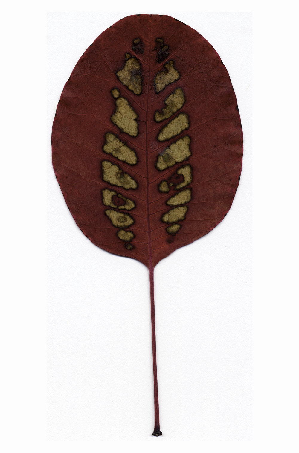Laser-cut smoke tree leaf