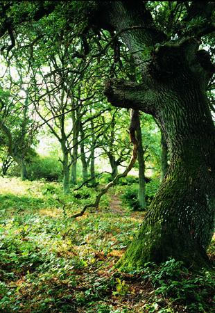 Skoven 2
