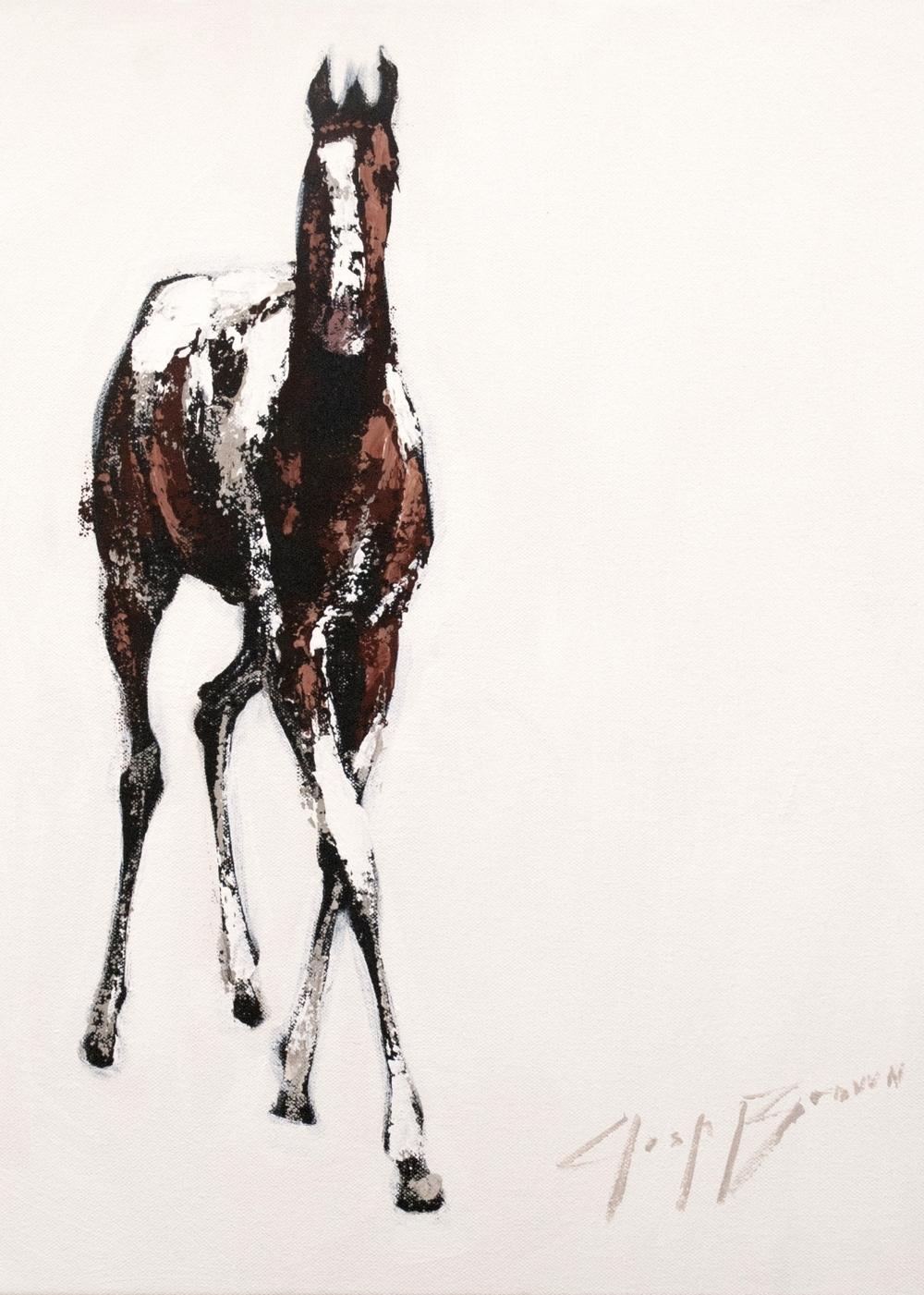 Horse on White, 11x16