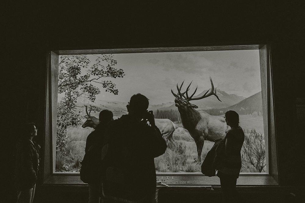 AMNH New York