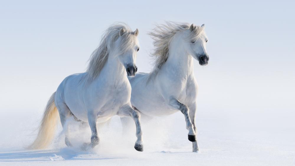 Racehorses.com - BabyTalk#11 - blog about race horses