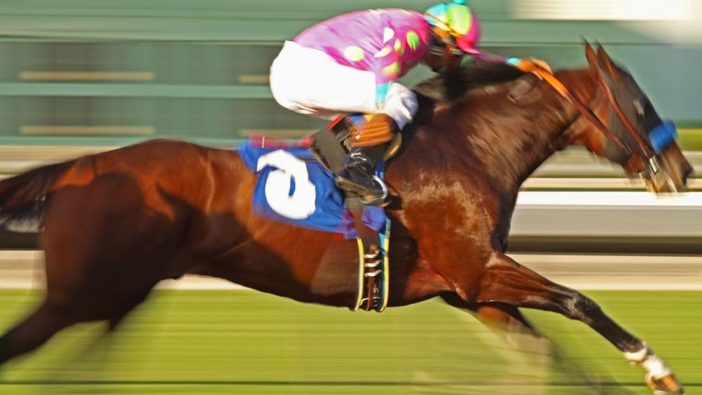 Racehorses.com BabyTalk Blog #20