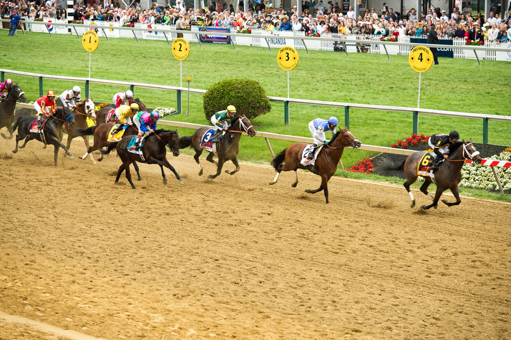 Finish of the 2013 Preakness Stakes  By Maryland GovPics (Flickr: The 138th Annual Preakness) [CC BY 2.0 (http://creativecommons.org/licenses/by/2.0)], via Wikimedia Commons