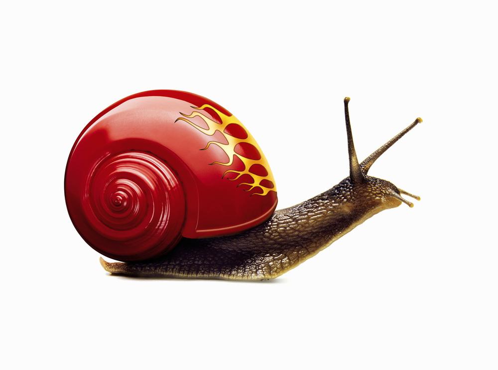 Snail-helmet.jpg