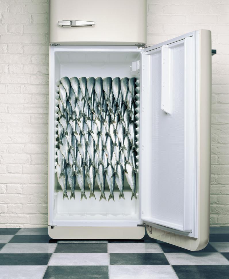 fish09.jpg