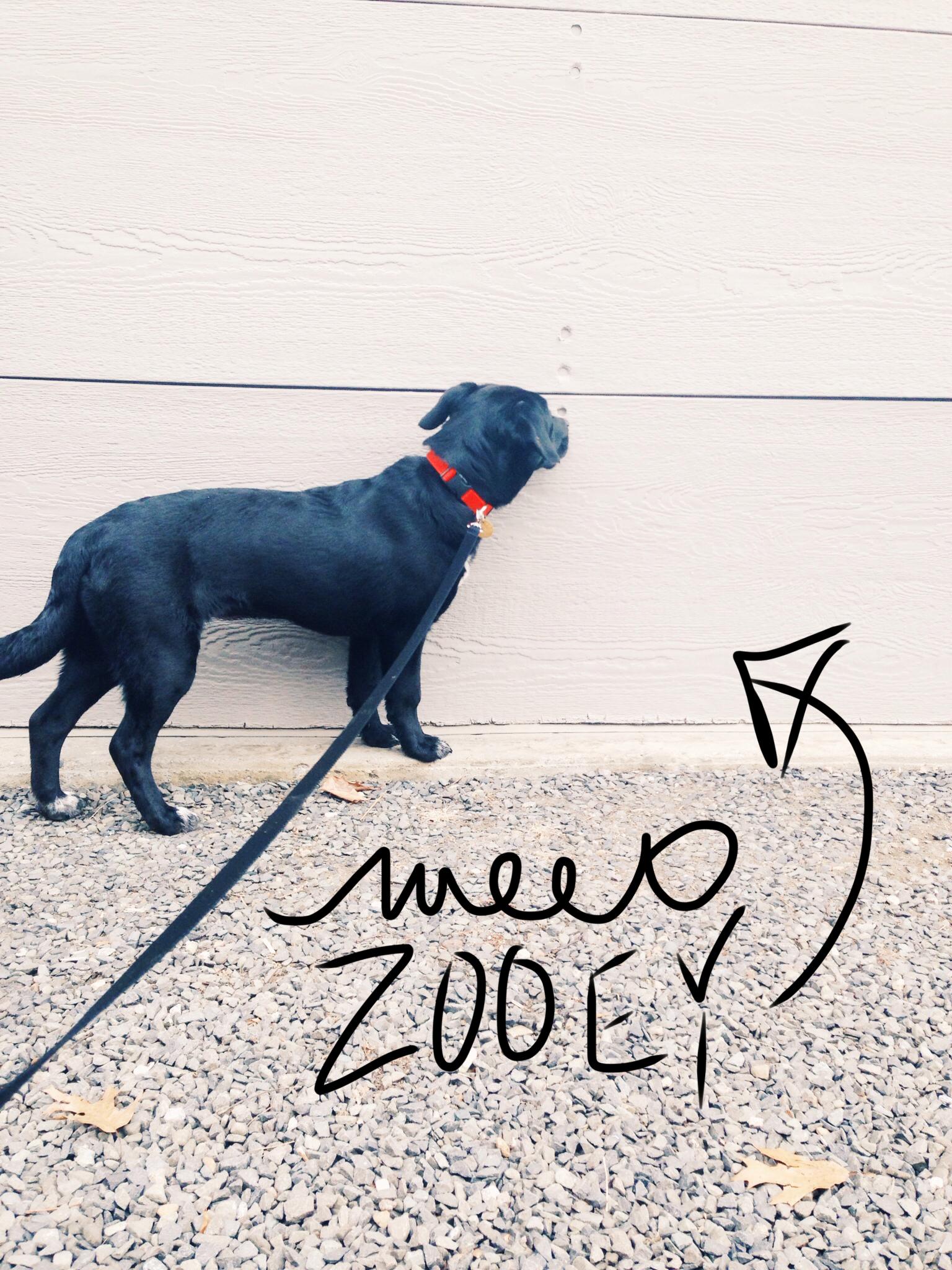 MeetZooey