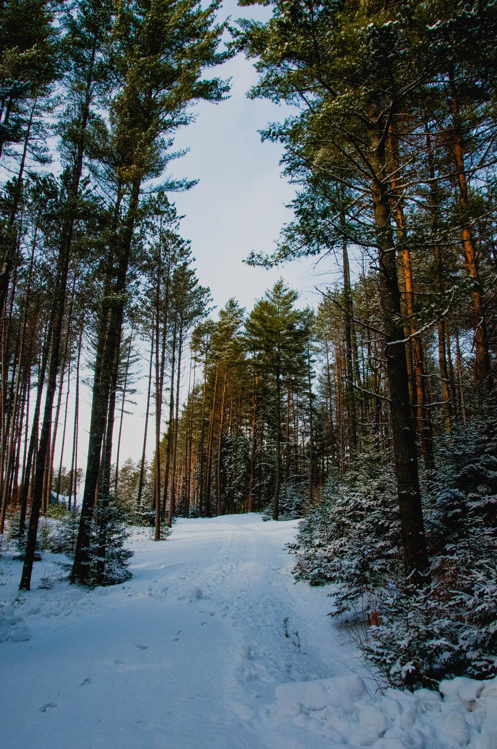 vt-forest.jpg
