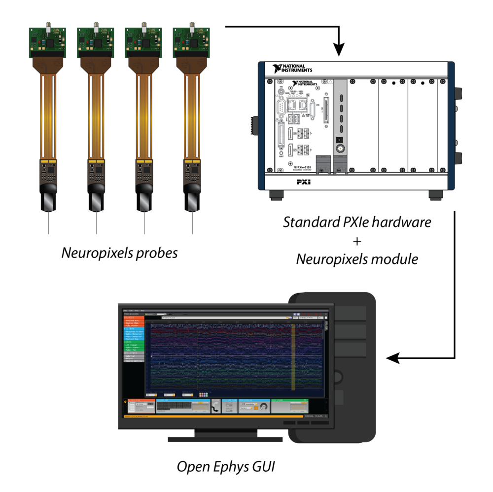 Hardware configuration - Up to four Neuropixels probes can interface with a single basestation module, which communicates with a PC via a standard PXIe interface card. Up to four basestations can live inside the same PXIe chassis, allowing you to stream data from 16 probes to a single computer.For recordings with two or more probes simultaneously, we recommend using the Multi-Probe Micromanipulator from New Scale Technologies. It was developed in collaboration with the Allen Institute in order to be the easiest way to flexibly mount Neuropixels probes and precisely insert them into the brain.