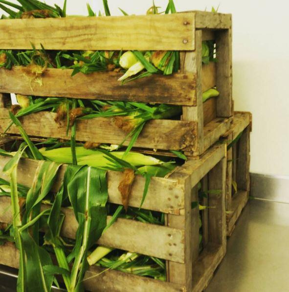 Locally grown organic corn