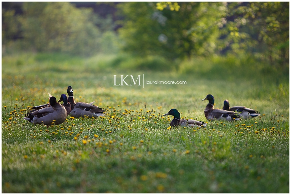 Milwaukee-Wedding-Photographer-Laura-K-Moore-KUHLOW_0148.jpg