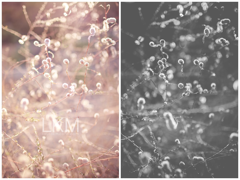 "Creosote Buds 1 | Desert Photography | Texture Tuesday | Fine Art Panels: 20"" x 40"" Giclee Canvases $225 set"