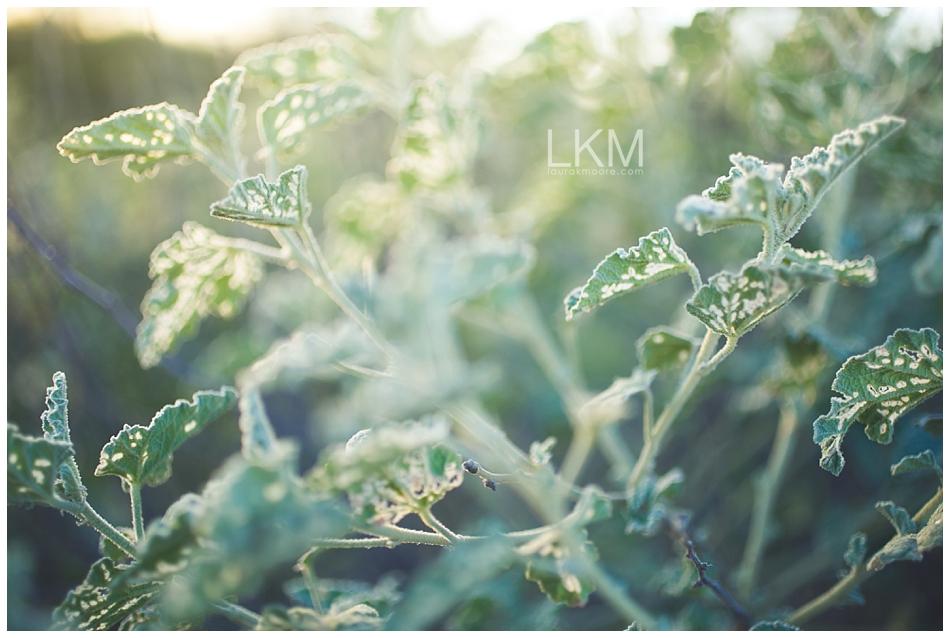 tucson-october-textures-wild-plant-life_0003.jpg