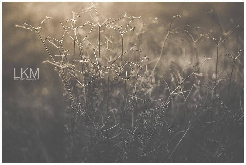 tucson-october-textures-wild-plant-life_0005.jpg