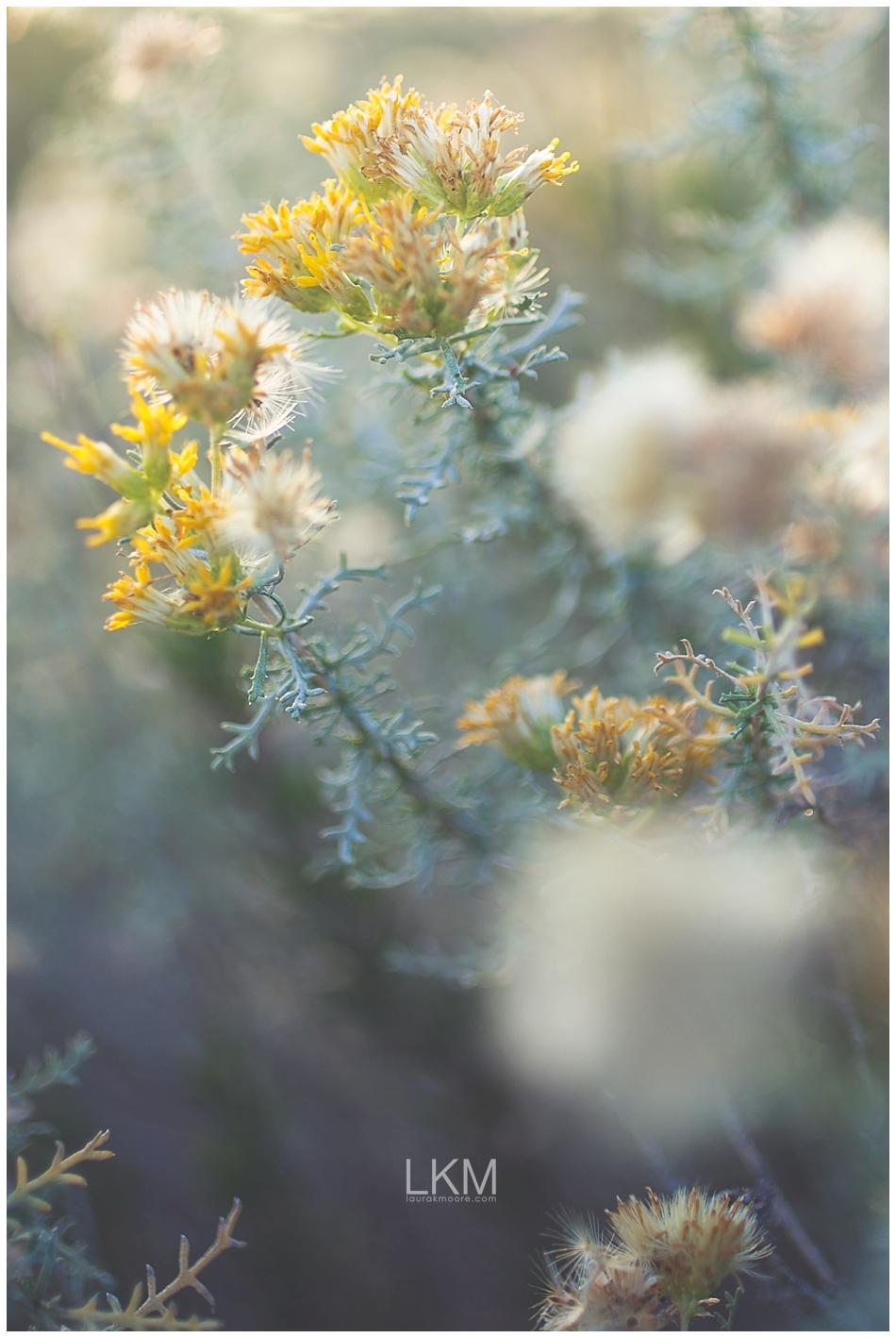 tucson-october-textures-wild-plant-life_0004.jpg