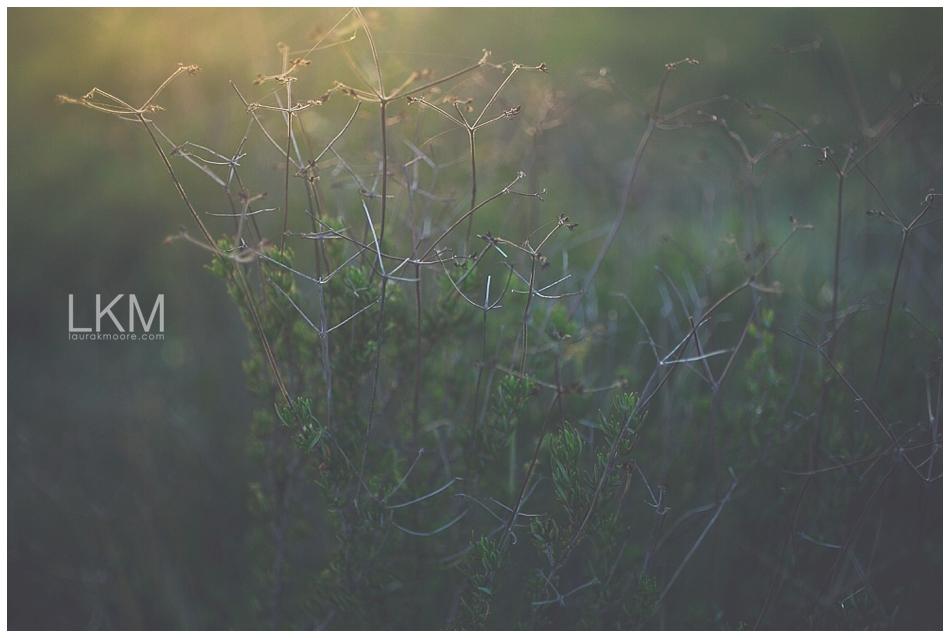 tucson-october-textures-wild-plant-life_0006.jpg