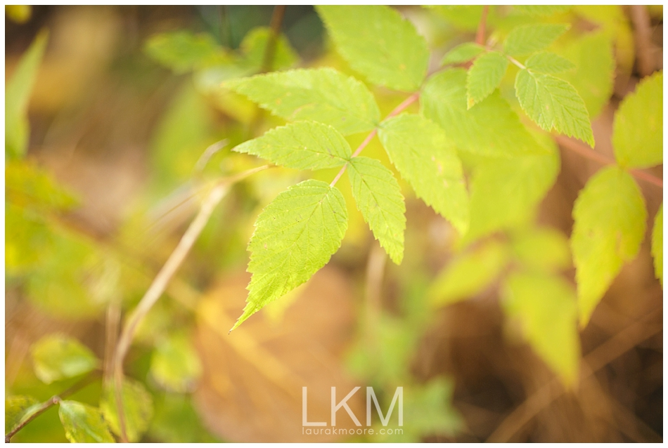mt-lemon-engagement-session-tucson-wedding-photographer-austin-corrie_0017.jpg