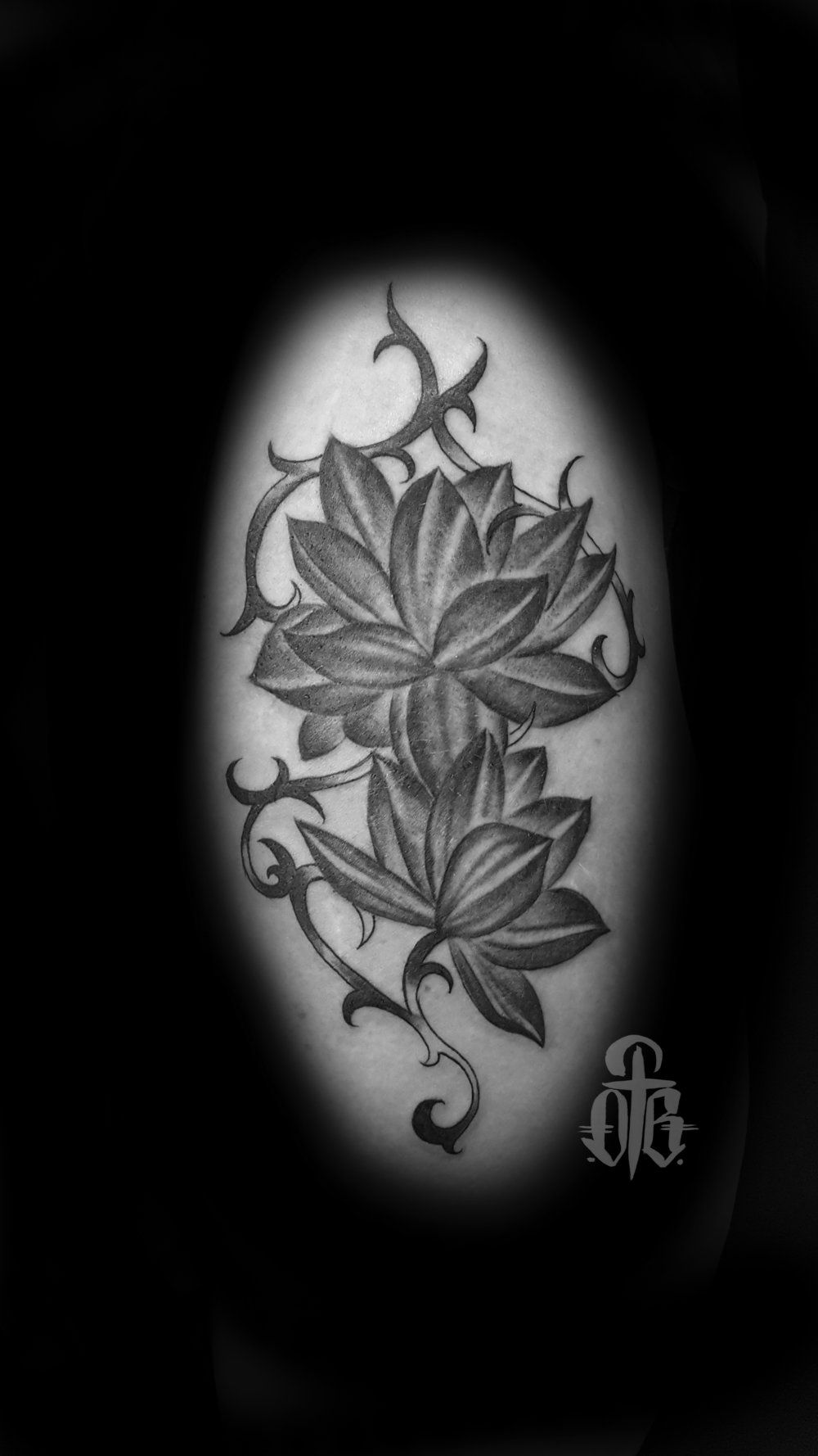 lotusvine.jpg