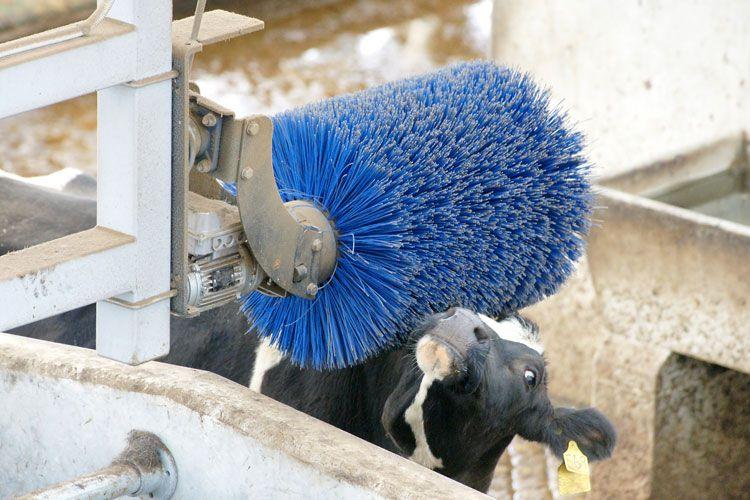 Cowhouse Construction Ltd 066 1114 Big