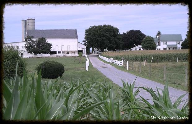localfarm