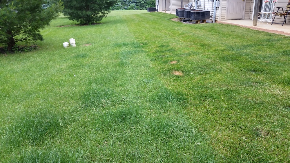 An example of nitrogen having a fertilizing effect as well as burning the grass.