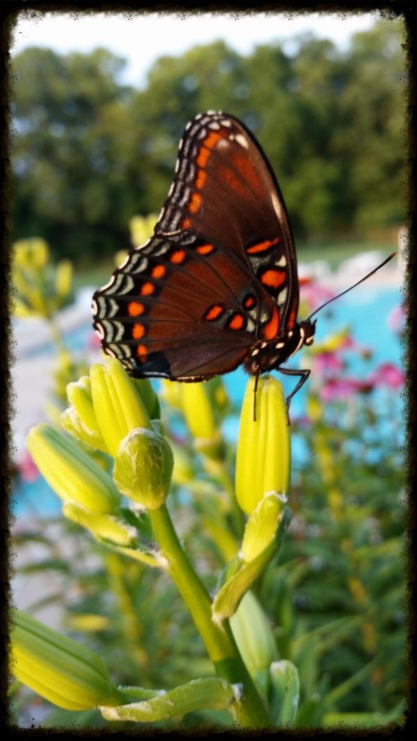 Patience creates beauty. -Shem.R