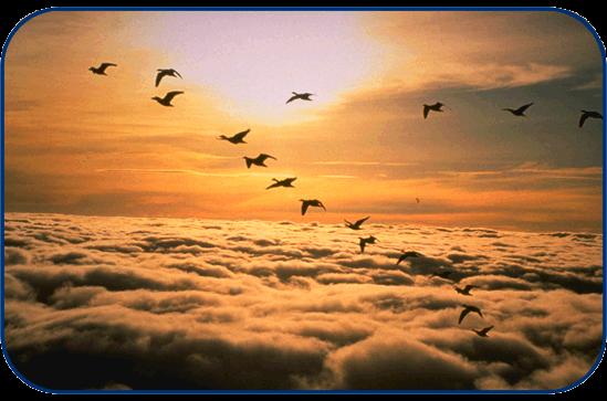 Geese V-Formation - Photo credit www.coastal.edu