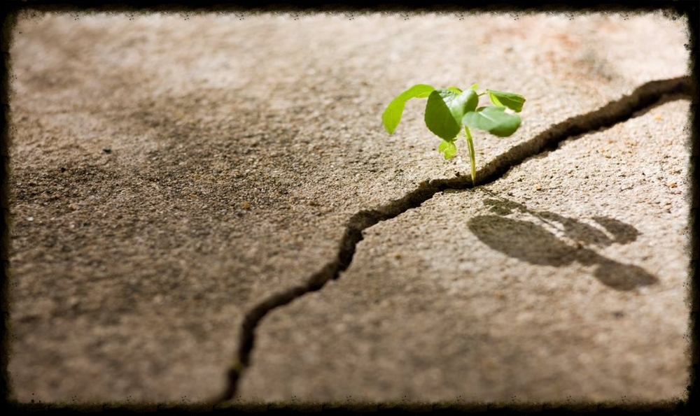 With perseverance you can break through anything. Photo Credit -www.elev8.com