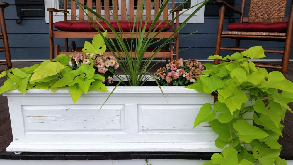 Lovely container planting on a front porch.