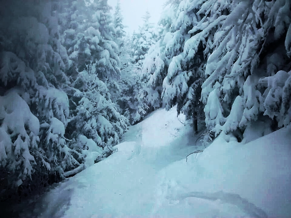 Vermont Glades